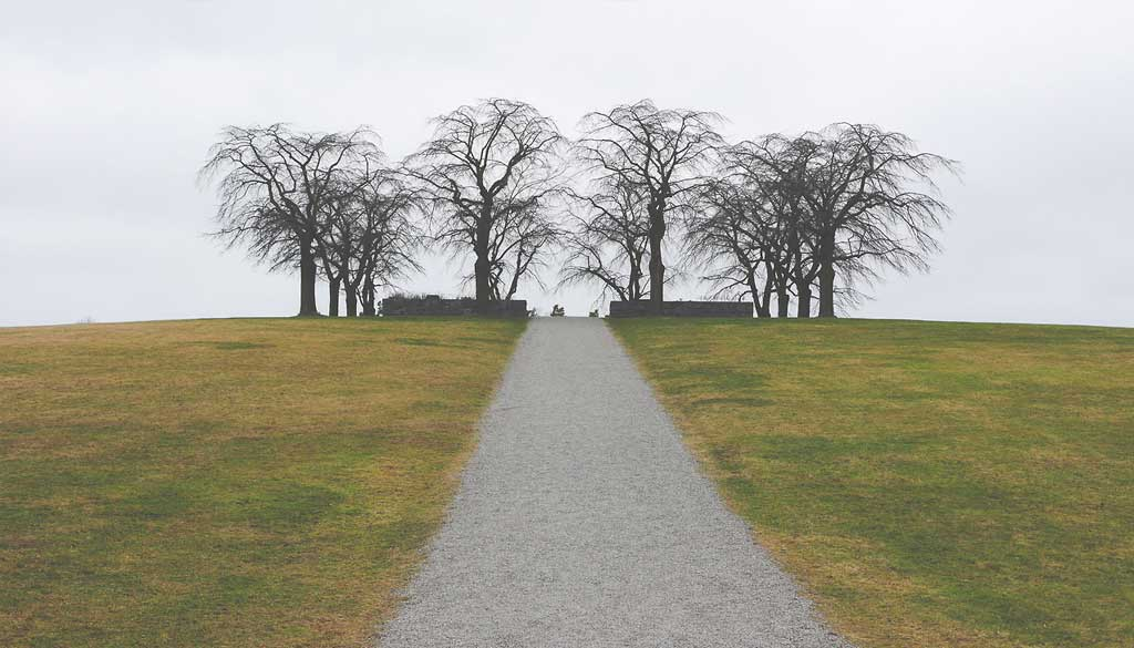 roadtrees