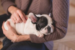 On Dying and Little Dogs