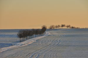 Boys of Winter & Prairie Things